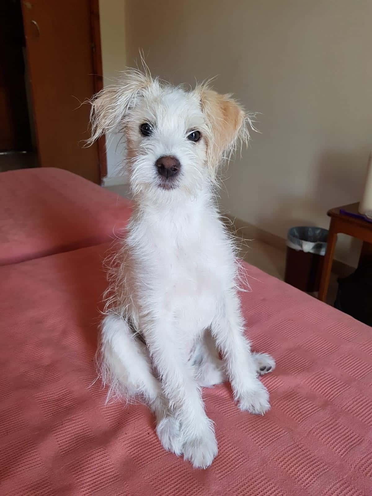 Auffanghund LuLu